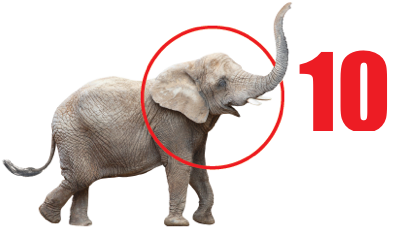 Image: Elephant!
